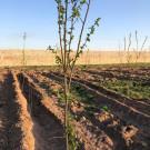 فروش فوری باغ ۱۰۰۰متری باقیمتی استثنایی در شهریار