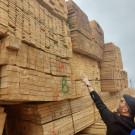 فروش عمده الوارروسی و نراد به سراسر ایران