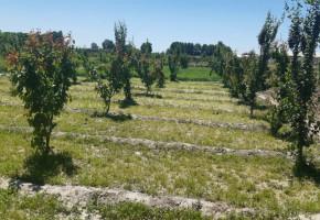 فروش باغ ۱۰۰۰متری شهرکی در منطقه کهنز شهریار