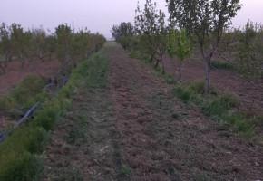باغ 2500 متر در نجم اباد