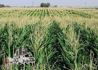 6 هزار متر زمین کشاورزی