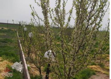 باغ 2000 متری در نظراباد