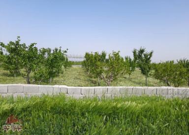 فروش باغ ٨٨٥٤ متری در تنكمان