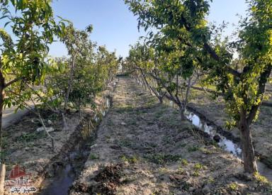 باغچه از 500 متری